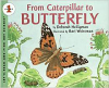 From Caterpillar to Butterfly Big Book (08)