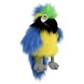 Blue & Gold Macaw (Baby) (12)