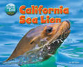 California Sea Lion (14)