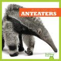 Anteaters (15)