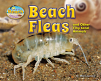 Beach Fleas and Other Tiny Sand Animals (18)