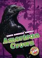 American Crows (19) Level 3