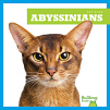 Abyssinians (21)