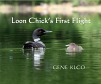 Loon Chick's First Flight (15)